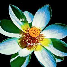 Australian Artist EM-DEE-EM Original Photograph ~ Digital Image ~ Helios 3039-1