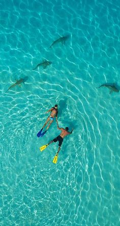 FRENCH POLYNESIA! Snorkel in the Moorea, French Polynesia! #FrenchPolynesia