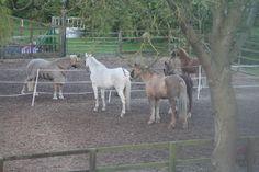 Nina, Sheridan, Silver, Calypso & Harmony