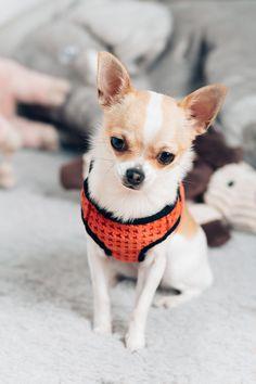 Szelki dla psa SOHO Bowl&Bone - różne warianty NaszeZoo.pl - najlepsze artykuły dla Twoich zwierzat