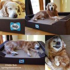 (paid link) Creative recycling is an art form. Here are original to create a dog Bedroom by reusing old stuff. Which one accomplish you prefer? #dogbedroom Dog Bedroom, Pet Supply Stores, New Beds, Puppy Love, Fur Babies, Pet Supplies, Dogs And Puppies, Old Things, Sleep