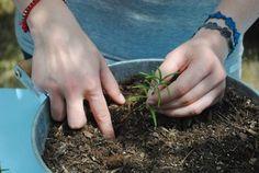 Letné mesiace sú ideálne na rozmnožovanie rastlín pomocou odrezkov. Je to veľmi jednoduché a zvládne to naozaj každý. Veď vyskúšajte!