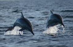 Dolphins Watching at Lovina Beach Bali