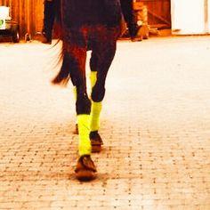 #hoves #horse #beautifull