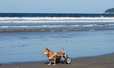 Cãozinho na praia