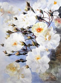 Rose Tchaikowsky A Stem Of White Roses And Buds Painting by Greta Corens