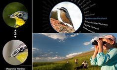 Twitcher app analyses photos to tell you what bird you've photographed