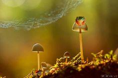 הפטריה   50 צילומי קלוז-אפ מופלאים של חיות מיניאטוריות בטבע