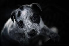 "Photo ""puppylove"" by brittawilliams"