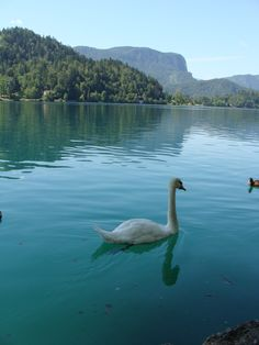 Lake Bled, Slovenia. Picturesque environment, surrounded by mountains and forests with a small island (Bled Island) and medieval-era Bled Castle above the lake.