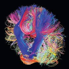 A Countdown to a Digital Simulation of Every Last Neuron in the Human Brain: Scientific American.
