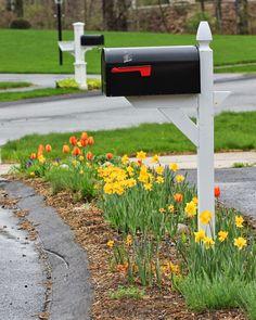 Hellstrip (sidewalk) garden. Daffodils, tulips, grape hyacinths. I would try a species tulip for better perennializing.