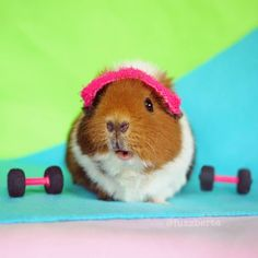 Look who showed up in Rio She has no chance of winning (because foam weights. And also guinea pig) but everypawdy's a winner in Fuzzberta's book!