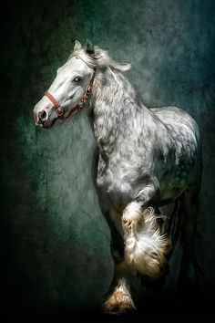 I don't usually like dapple horses but this one is gorgeous! by elba