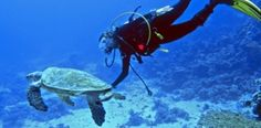 Swim alongside sea turtles on a Scuba Diving Adventure in Fuerteventura, Spain.