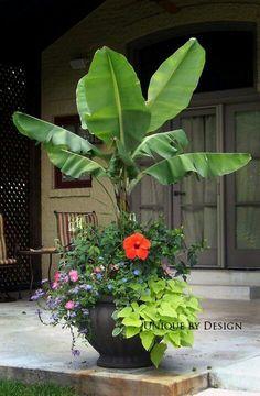 Fall container gardening flowers ornamental cabbage - Garden terrassa ...