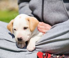 Bringing a new puppy home? From house training tips to critical socialization advice, Dr. Marty Becker reveals how to take care of a new puppy.