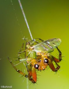 Spider hunt insect - null