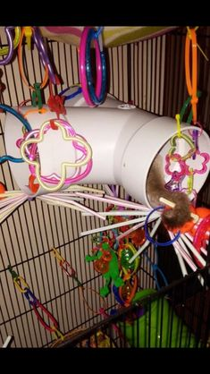 PVC tunnel for sugar glider u2026 & sugar glider toys--great tent time ideas! | Sugar Bears ...