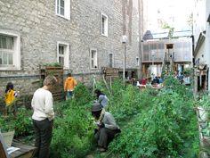 Le 56/Urban garden | INSIDEflows