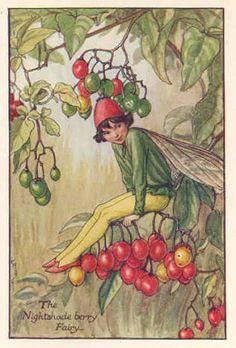 Risultati immagini per cicely mary barker flower fairies prints