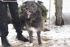 BLACK   Type : Griffon Sexe : Mâle Age : Adulte Couleur : Noir avec marque blanche  Taille : Moyen Lieu : Haute-Savoie - 74 (Rhône-Alpes)  Refuge :  Refuge de l'espoir(Haute-Savoie)  Tél : 04.50.36.03.39