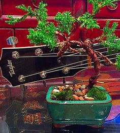Taylor guitar with mini juniper Bonsai. Both i use to lose myself when I need to find myself! #taylorguitars #juniperbonsai #juniper #tinytree #patience #bellarine #bellarinepeninsula #lovelivegeelong #surfcoast #lovelivegeelong #oceangrove #photooftheday #loseyourself #christianjcreations by christianjcreations http://ift.tt/1JO3Y6G