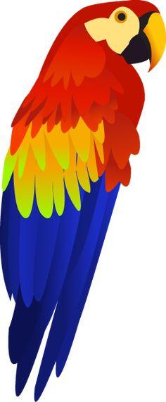 330 papageiideen  papagei papagei zeichnung vögel kunst