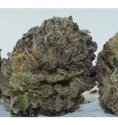 Platinum Girl Scout Cookies is a multi-talented hybrid, that was created out of two unique and already popular master-strains