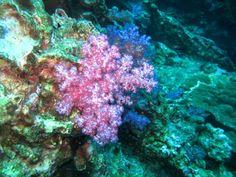 ALIMENTAÇÃO NATURAL & NUTRACÊUTICA : Os Benefícios das Algas Marinhas...Pele mais jovem...