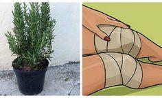 Plant Leaves, Plants, Fit, Shape, Plant, Planets