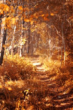 "fresh-fallen-leaves: "" ""sweater weather "" ""  Autumn & Halloween"
