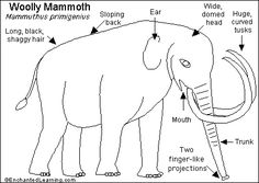 Woolly Mammoth Read-and-Answer Quiz- EnchantedLearning.com