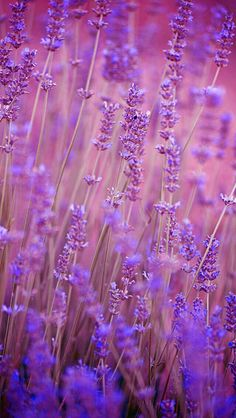 Nature Wallpaper IPhone Flowers Purple