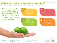 ¿Como elegir los mejores limones? SAGARPA SAGARPAMX #MéxicoAgroPotencia