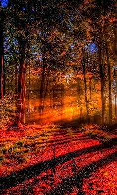 beautiful colors of nature, patterns everywhere, yet the beams of sunlight add that quality of spirit to the image that is harder to see when its not..