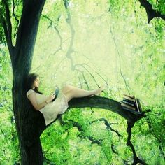Up a tree, with a book.