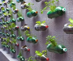 Plastic-Bottle-Garden......ok this would b great....a wall of coke...a wall of Dr.pep....lol