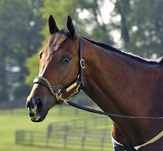 Barbaro ~ Thoroughbred : Going into the Kentucky Derby, Barbaro was undefeated, he won the Derby in 2006 by 6 and a half lengths!