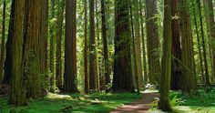 Imagine that the trees glint in the sunlight. Faerie forest--highest concentration of magic anywhere on the island