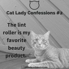 Cat Lady Confessions #2 from the crazy cat lady