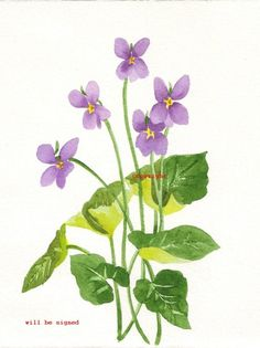 Check out our violet watercolor selection for the very best in unique or custom, handmade pieces from our watercolor shops. Watercolor Print, Watercolour Painting, Watercolor Flowers, Watercolors, Plant Illustration, Botanical Illustration, Botanical Drawings, Botanical Prints, Simple Compass Tattoo