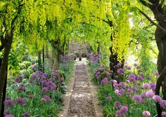 Laburnum Tunnel at Barnsley House