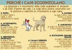 la comunicazione dei cani: la coda che scodinzola.