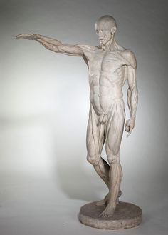 Jean-Antoine Houdon  (French 1741–1828)  Flayed Man (L'Écorché)  1767  plaster   The Joey and Toby Tanenbaum Collection, 2002