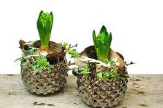 Vit hyacint i silverkruka dekorerad med näver, lärkkottar och minirenhorn. Lite murgröna också. http://holmsundsblommor.blogspot.se/2014/12/tre-sma-julgrupper.html