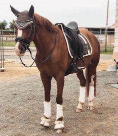 Sport, Horse Riding, Dressage, Equestrian, Westerns, Cute Animals, Horses, World, Tack