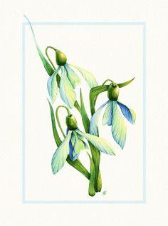 Watercolor Snowdrop Flowers  8x10 fine art by NebelsWatercolor, $23.00