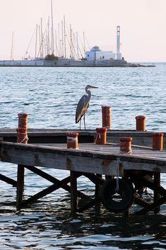 Το θαλασσοπούλι και το παρεκκλήσι του Αγίου Νικολάου. Καλαμαριά (Αύγουστος 2018) Greece, Greece Country