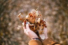 "FP Monday Quote: ""Autumn is a second spring when every leaf is a flower."" - Albert Camus"